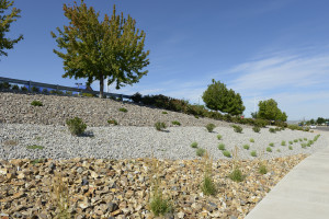 commercial xeriscaping